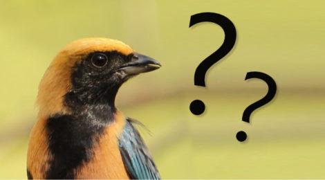 identificação de aves