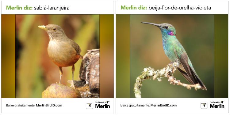 aves identificadas pelo Merlin
