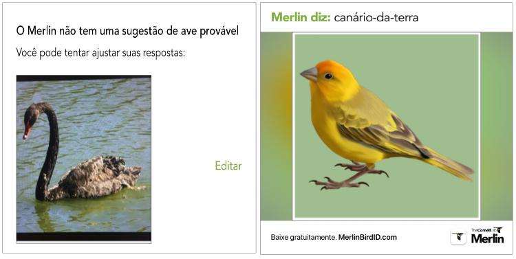 mais aves identificadas pelo Merlin