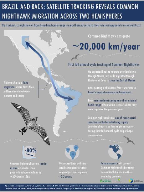Rota migratória do bacurau-norte-americano