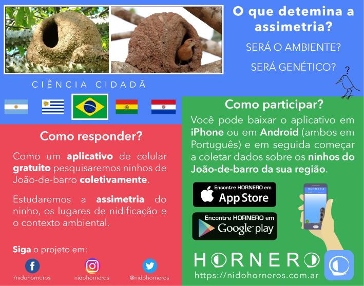 projeto hornero