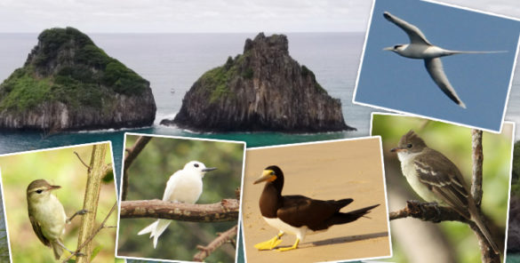 aves de Fernando de Noronha