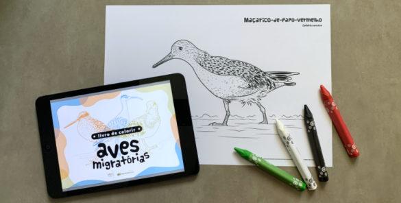 livro de colorir - aves migratórias