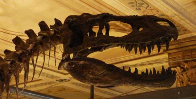 museu historia natural londres