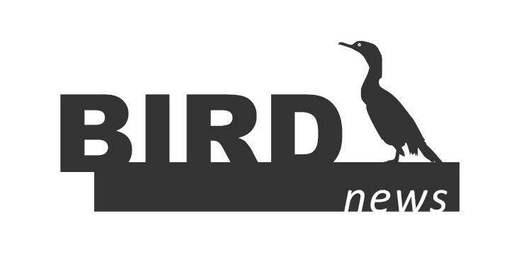 birdnews novembro