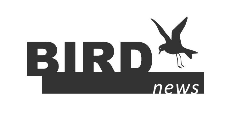 birdnews dezembro