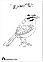 Desenhos De Aves Brasileiras Para Colorir A Passarinhologa