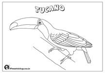 Aves Brasileiras Para Colorir Tucano A Passarinhologa