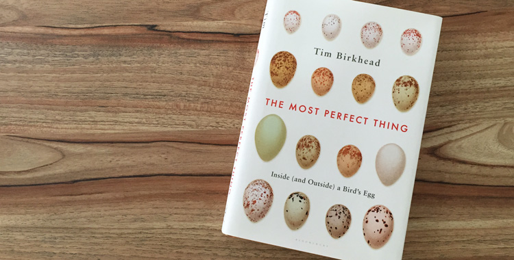 the most perfect thing - inside (and outside) a bird's egg