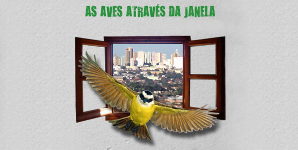 as aves através da janela